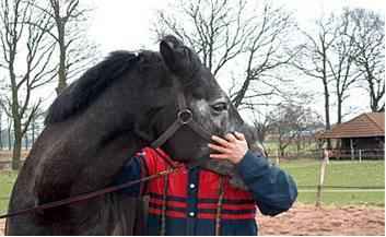fysiotherapie paard