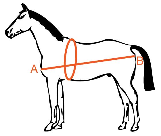 gewicht paard