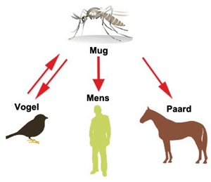 west nijl virus